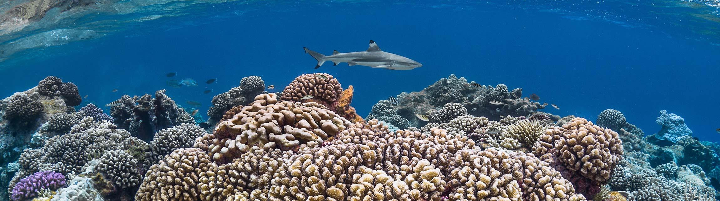 Plongez à Bora Bora avec Topdive