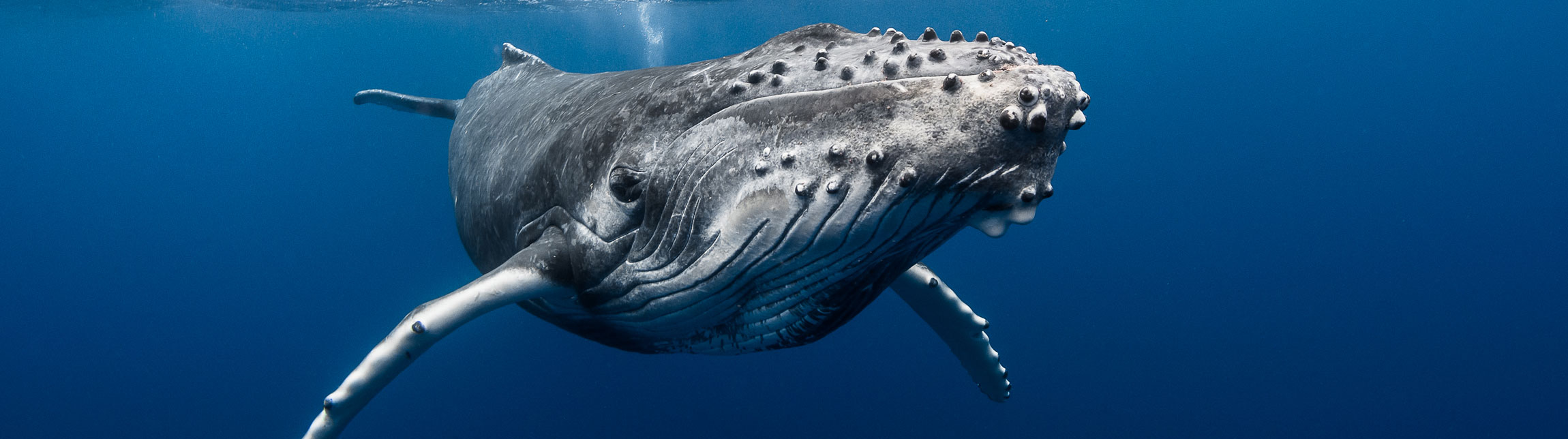 Plongez à Tahiti avec Topdive