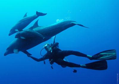 Plongeur et Dauphins dans la passe de Tiputa à Rangiroa avec Topdive