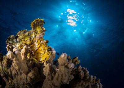 Corail sous la surface de la mer