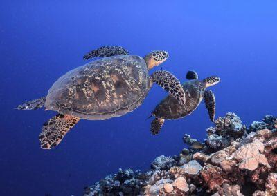 Plongée de découverte en Polynésie avec Topdive