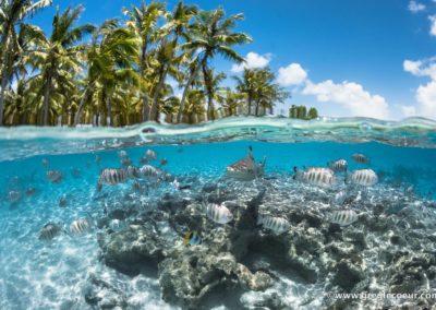 Snorkeling-a-Fakarava-avec-TOPDIVE---greglecoeur