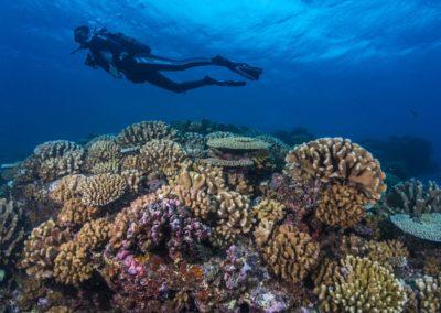 Fonds marins barrière de corail à Tahiti avec Topdive