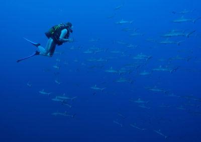 Mur de requins