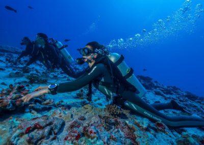 Plongée au Nitrox à Fakarava avec TOPDIVE