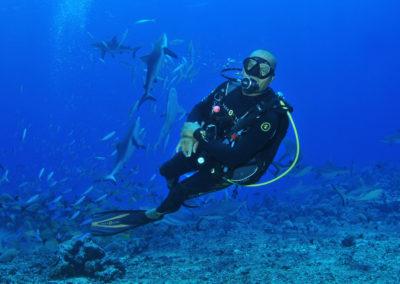 Plongée avec les requins de Rangiroa - Topdive Rangiroa ©Philippe-Joachim