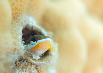Tahiti-Aquarium-Petit poisson-Topdive