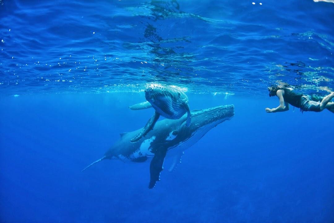 baleines polynesie